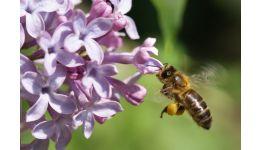 Read more: Senzațional! Albinele au inventat mumificarea!