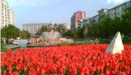 Read more: În Pitești vor înflori peste 180 de mii de lalele!