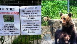 Read more: Deși Cetatea Poienari e închisă din cauza urșilor, turiștii și unii agenți economici din  zonă ignoră pericolul