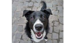 Read more: Vine gerul! Asociația THERAPY DOGS vă cere ajutorul! Adăpostiți un câine sau o pisică pentru 4 zile