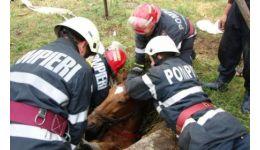 Read more: Pompierii argeșeni chemați să salveze un cal căzut într-un canal. Din păcate...