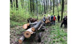 Read more: Chiar acum! Hoți de lemne prinși la furat în Argeș
