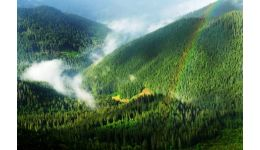 Read more: VIDEO. Păduri românești în relatările călătorilor străini