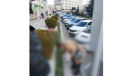 Read more: Femeie din Mioveni amendată pentru smulgerea lalelelor din Pitești
