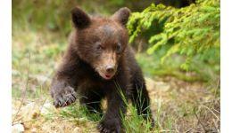 Read more: Urs văzut în curtea unui liceu din Argeș