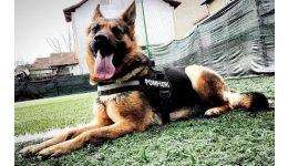 Read more: Sasha, câinele salvator al ISU Argeș, a ieșit la pensie