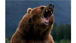 Read more: Acum, în Munții Făgăraș. Doi turiști alergați de urs. Salvatorii au plecat după ei