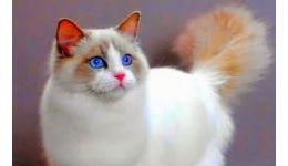Read more: SofistiCAT: Cele mai frumoase exemplare de pisici din toate colţurile lumii vin în România