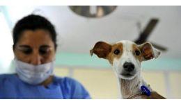 Read more: Asociația Animal Society/Four Paws va steriliza GRATUIT câinii din comuna Budeşti (Vâlcea) şi împrejurimi