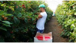 Read more: 300 locuri de muncă în domeniul agricol (recoltare zmeură) în Portugalia prin intermediul Reţelei EURES