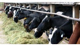 Read more: Guvernul Grindeanu susține sectorul zootehnic