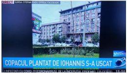 Read more: Stejarul plantat de Iohannis s-a uscat. Președintele acuză PSD