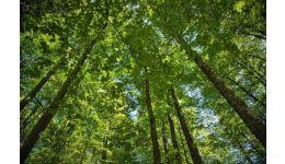 Read more: Veste bună de la ROMSILVA! A început procesul de înscriere a dreptului de proprietate publică a STATULUI asupra pădurilor administrate