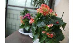 Read more: DE SPERIAT !!! Plantele fac CALCULE MATEMATICE