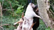 Torționarul câinilor trebuie prins. Share!